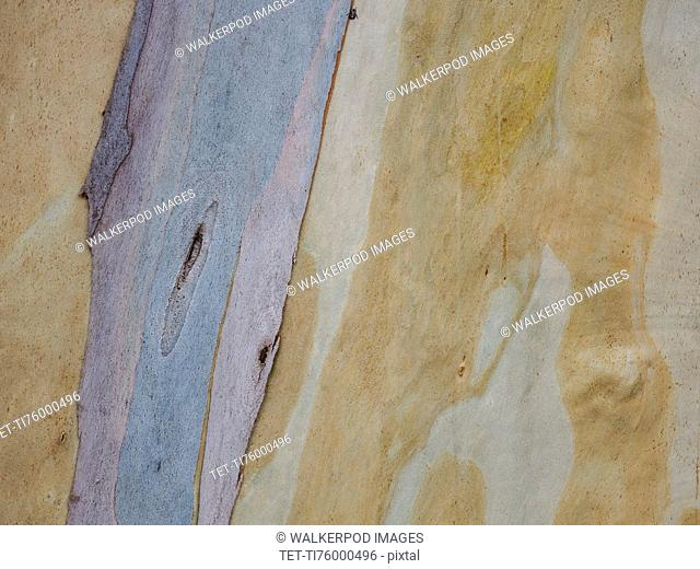 Australia, New South Wales, Plant bark at Blue Mountains