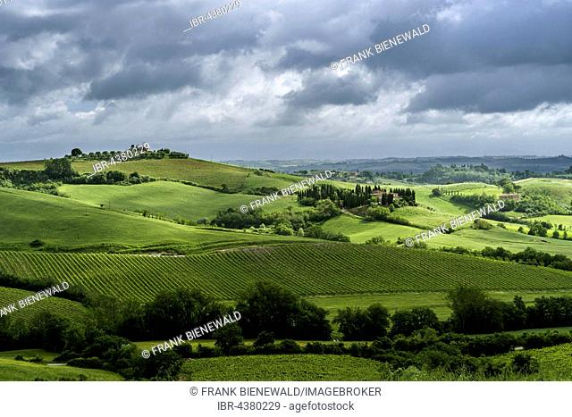 Typical green Tuscan landscape in Val d'Orcia with hills, fields, trees, wineyards, olive plantations and cloudy sky, Montefollonico, Tuscany, Italy