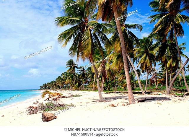Deserted beach, Saona Island, Dominican Republic