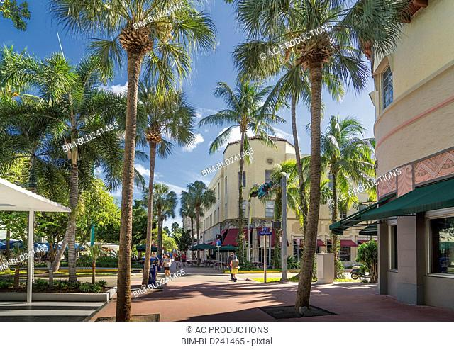 Palm trees on urban sidewalk, Miami Beach, Florida, United States