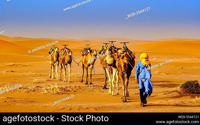 A man leading a camel train across the Moroccan Sahara Desert near Chegagga
