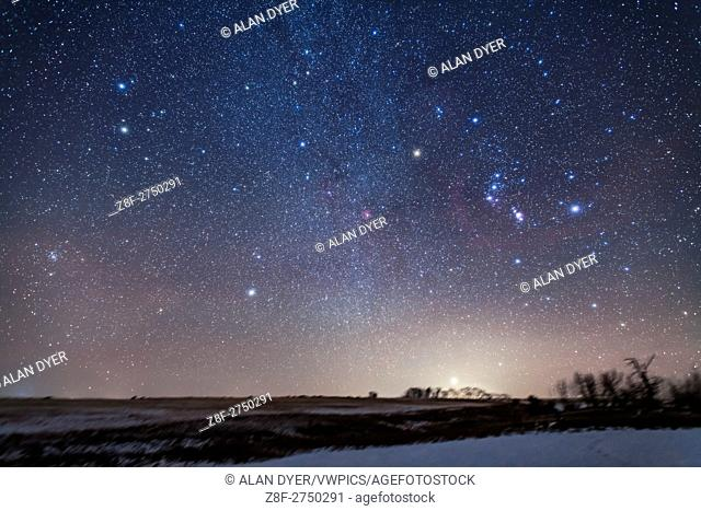 Orion rising at right, with Sirius, the Dog Star, just clearing the treetops amid the glow of light pollution, while Procyon, the bright star in Canis Minor