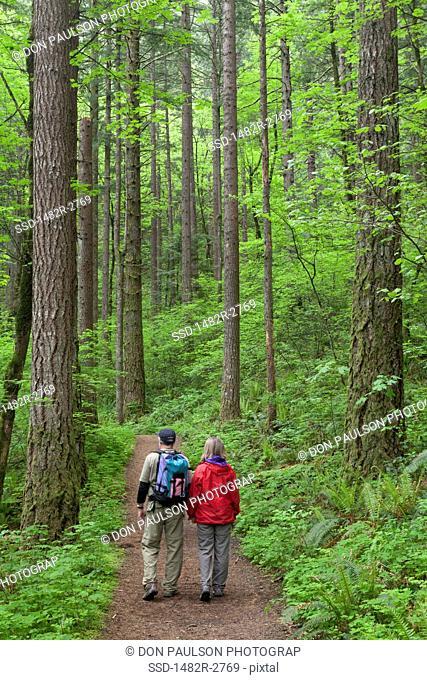USA, Oregon, Columbia River Gorge, Elowah Falls Trail, People walking through forest