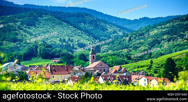 Vineyards near the village of Riquewihr, Alsace, France in the foothills of the Vosges Mountains