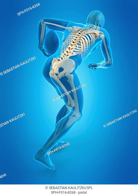 Skeletal structure of rugby player, illustration