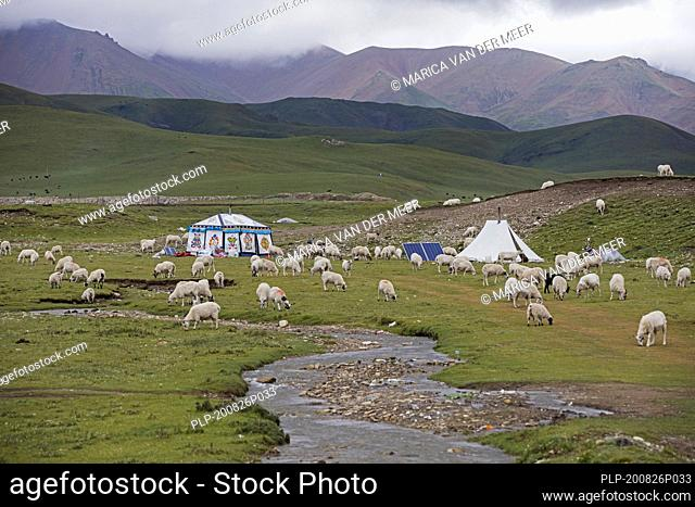 Sheep and Tibetan nomadic tent with solar panels in the Chinese Himalayas, China