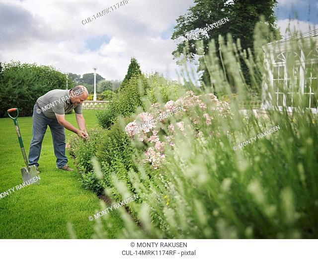 Gardener Tending Border