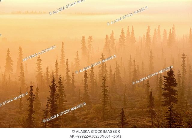 Sunrise over a foggy forest, Katmai National Park and Preserve, Southwest Alaska, Autum