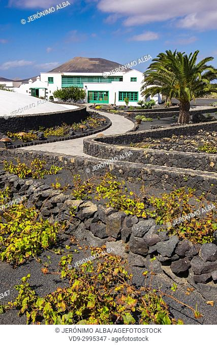 Exterior view, vineyard. Casa Museo del Campesino, monument to the Farmer. created by César Manrique. San Bartolome. Lanzarote Island, Canary islands, Spain