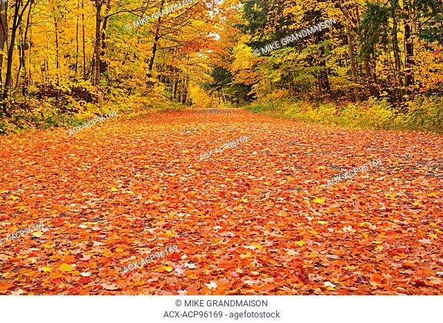 Country road covered in fallen maples leaves in autumn Goulais River Ontario Canada