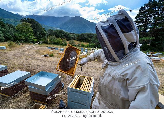 Pedro Arto Beekeeper, Aragües del Puerto Village, Jacetania, Huesca, Aragon, Spain, Europe