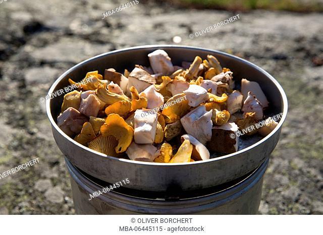 mushrooms on stove, outdoor