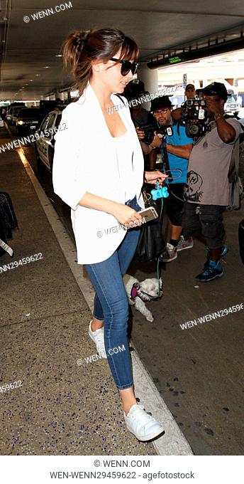 Felicity Jones at Los Angeles International Airport with her dog Featuring: Felicity Jones Where: Los Angeles, California
