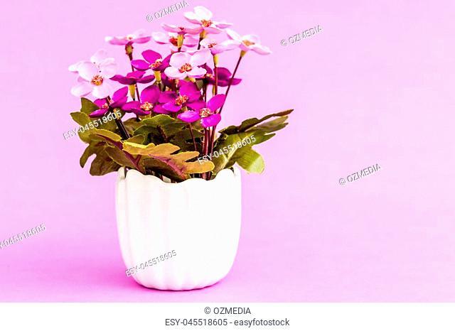 Artificial flower in white flowerpot on pink background