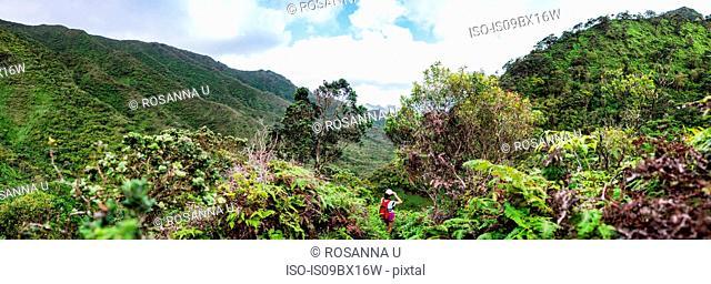Hiker walking in rainforest, Moanalua Valley Trail, Oahu, Hawaii
