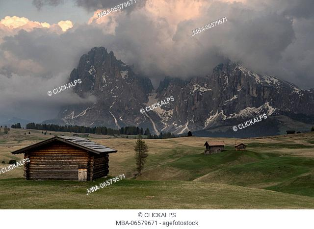 Alpe di Siusi/Seiser Alm, Dolomites, South Tyrol, Italy, View from the Alpe di Siusi to the peaks of Sassolungo/Langkofel and Sassopiatto / Plattkofel