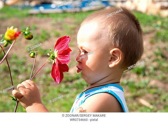 little boy smells flower of a dahlia