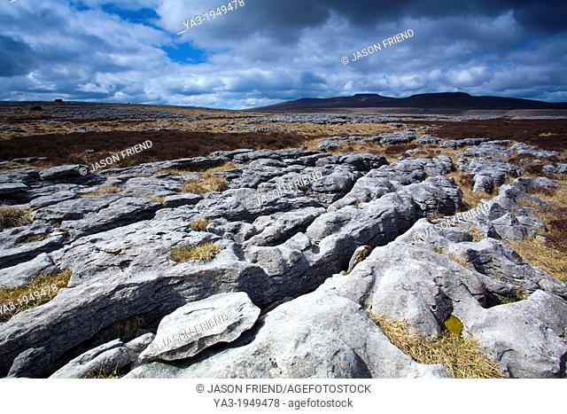 England, North Yorkshire, Yorkshire Dales National Park. Limestone pavement known as Moughton Scars, near the small village of Horton in Ribblesdale