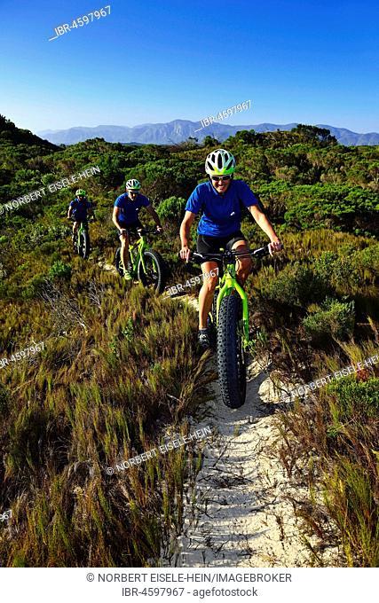 Mountain biking on fat bikes through bushes, cycling, Nature Reserve, De Kelders, Gansbaai, Western Cape, South Africa
