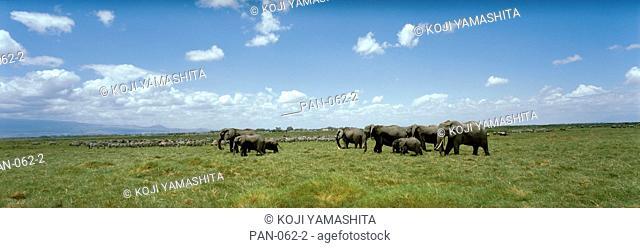 Elephants in Amboseli National Park, Kenya