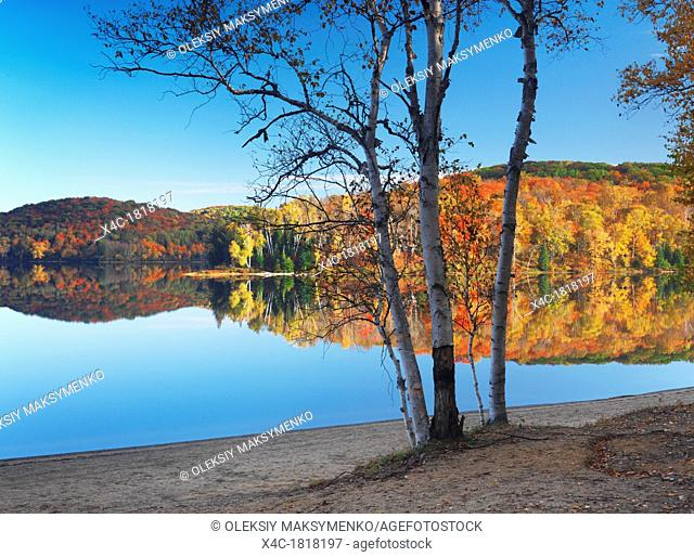 Birch trees on a shore of a lake with colorful autumn fores reflecting in it  Arrowhead Provincial Park, Ontario, Canada
