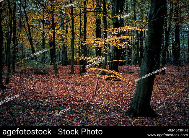 Beautiful golden colored branch in calm autumn forest