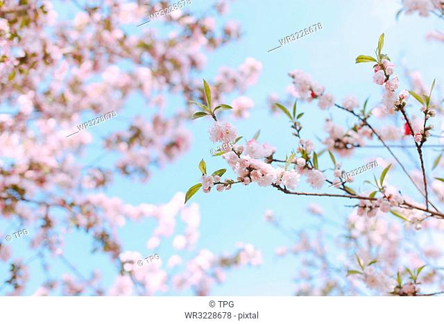 Spring scenery;China