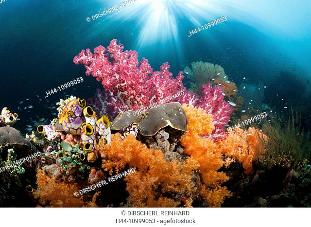 Corals growing near Mangroves, Raja Ampat, West Papua, Indonesia