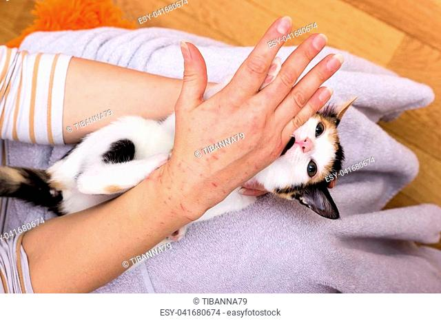 Little baby cat lies on his back and bites in a hand