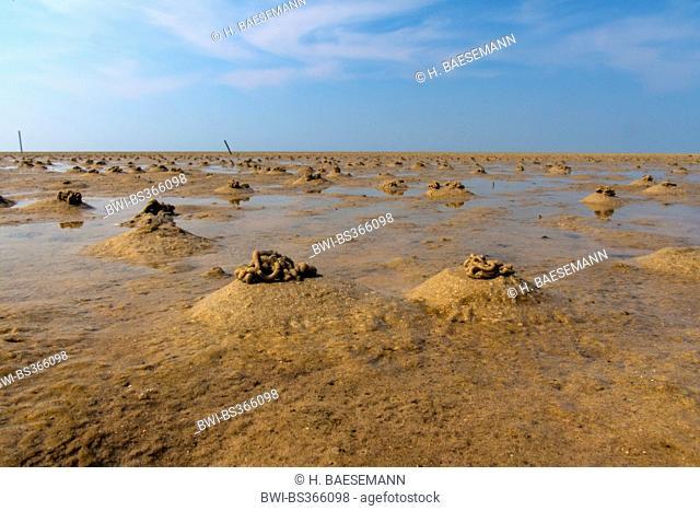 European lug worm, blow lug, lugworm (Arenicola marina), sandy tidal flat with blow lug faeces, Germany, Lower Saxony, Spiekeroog