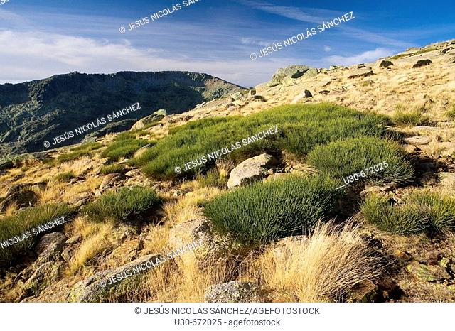 La Ceja (2.425 m.). Tampal valley. Sierra de Gredos, Solana de Ávila, Avila province. Castilla-Leon, Spain