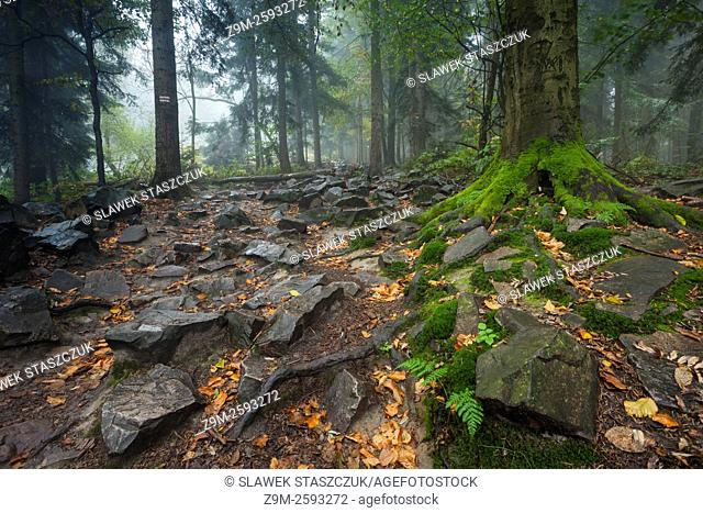 Misty autumn morning on top of Bald Mountain in Swietokrzyskie (Holy Cross) Mountains, Poland. Primeval fir forest