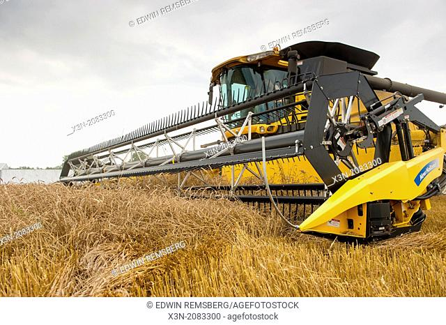 Combine harvester in wheat on the Eastern Shore of Maryland USA