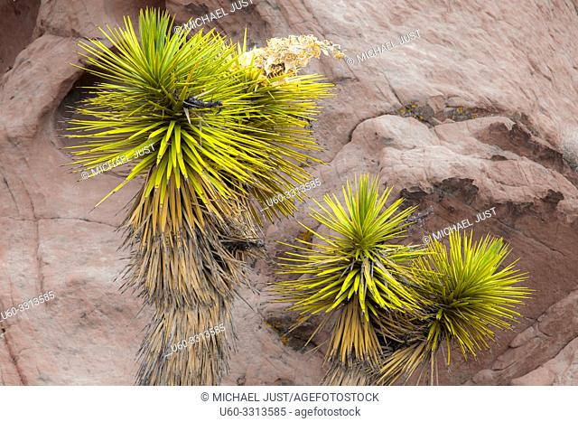 Sandstone rock formations and desert flora make up Gold Butte National Monument in Nevada