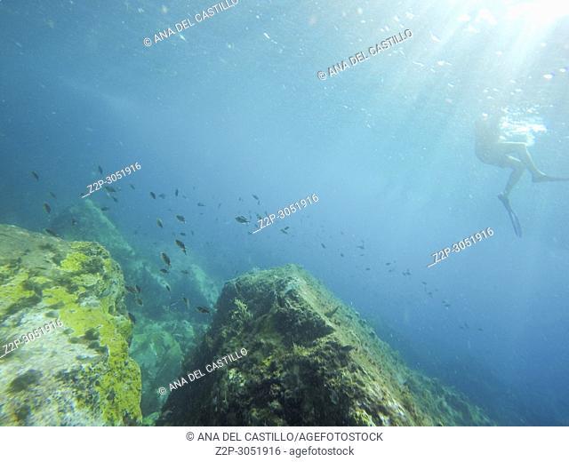 Underwater blue Caribbean sea. Martinique island, Antilles