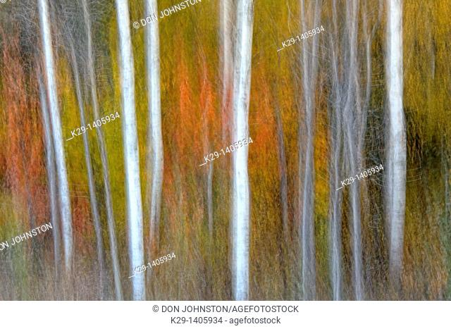 Autumn trees Camera movement