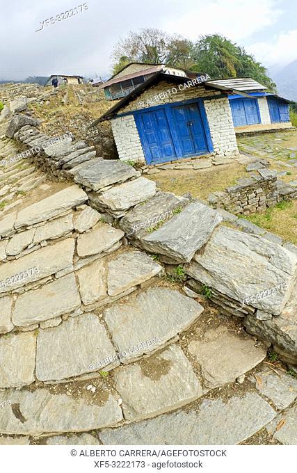 Mountain Path, Trek to Annapurna Base Camp, Annapurna Conservation Area, Himalaya, Nepal, Asia