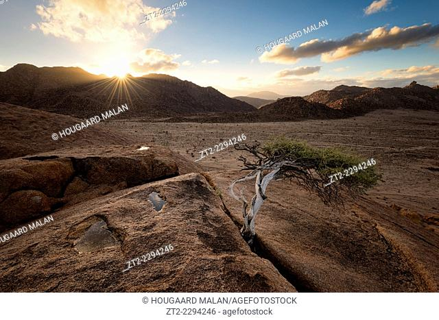 Landscape photo of a small tree atop a rock over looking a mountain valley. Richtersveld National Park, South Africa