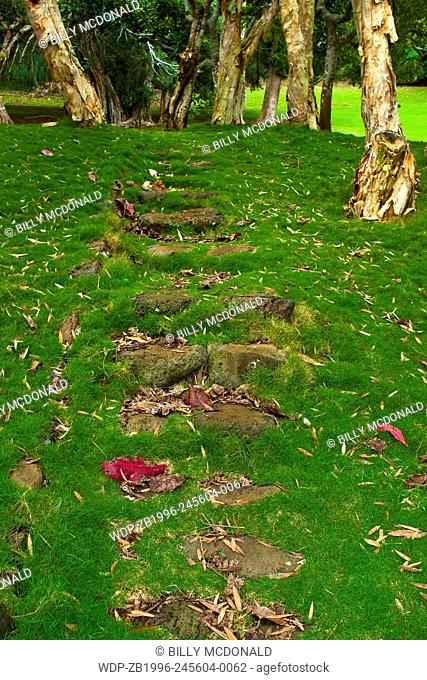 Stone Pathway Through Paper Bark Tree Forest at The Koele Lodge, Lanai, Hawaii, USA