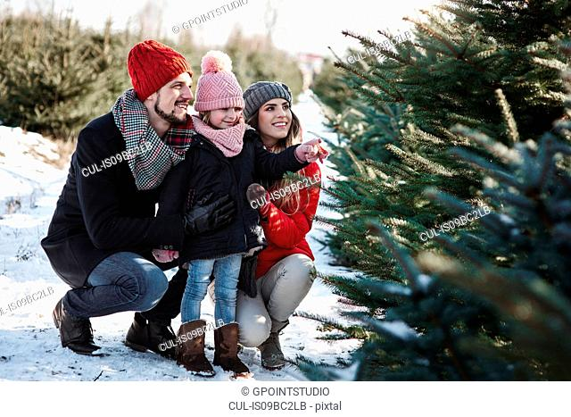 Girl and parents looking at forest christmas trees