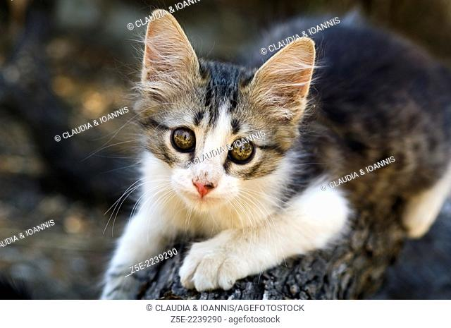 Kitten climbing on tree trunk and looking at camera