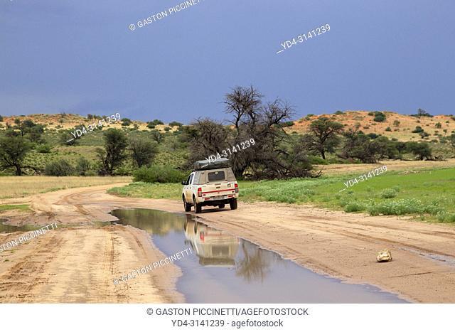 Spectacular landscapes of the Kalahari, often accompanied by spectacular skies, Kgalagadi Transfrontier Park, Kalahari desert, south Africa/Botswana
