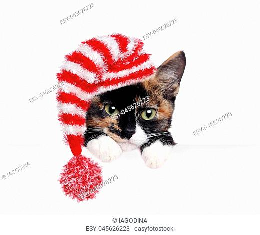 Closeup portrait of a kitten wearing hat holding blank board