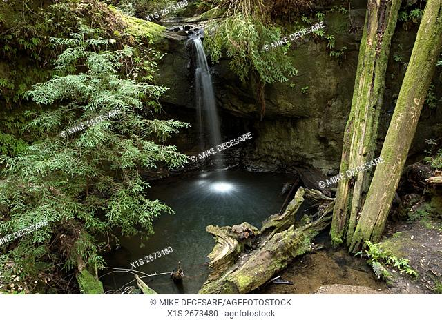 The Sempervirens waterfall is surrounded by moss covered trees and lush, green vegetation