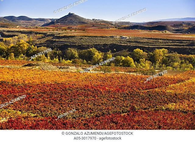 Landscapes and Vineyards in autum next to Laguardia. Rioja alavesa. Spain