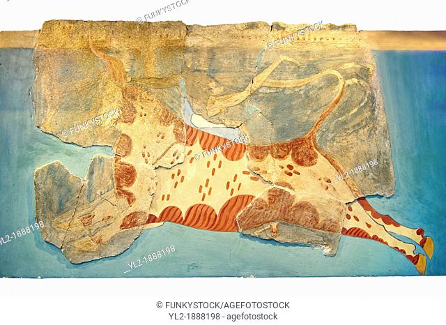 Mycenaean Fresco wall painting of a man leaping over a bull from the Tiryns, Greece  14th - 13th Century BC  Athens Archaeological Museum