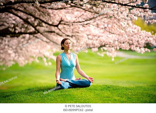 Woman in lotus position under cherry tree