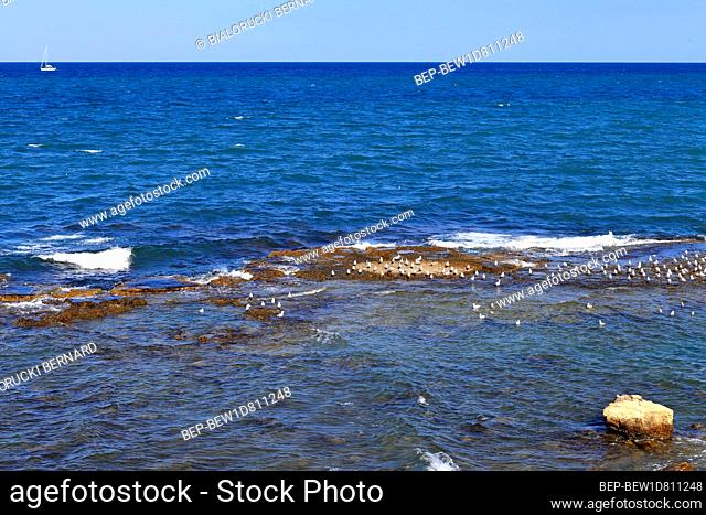 Adriatic Sea shoreline with sea birds gatherings at the water waves in Trani old town historic city center, in Apulia region of Italy