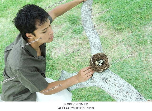 Man perching on tree branch, looking at bird's nest, high angle view
