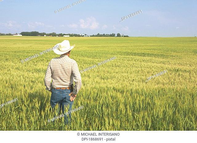 alberta, canada, a farmer standing in a wheat field